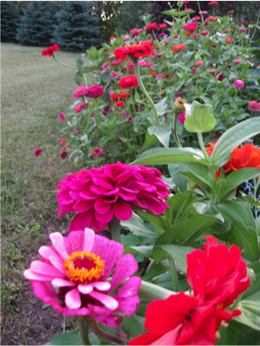 Flowers Decorate Vegetable Gardens And Produce Beautiful Garden Borders!